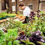 Gardening Stories